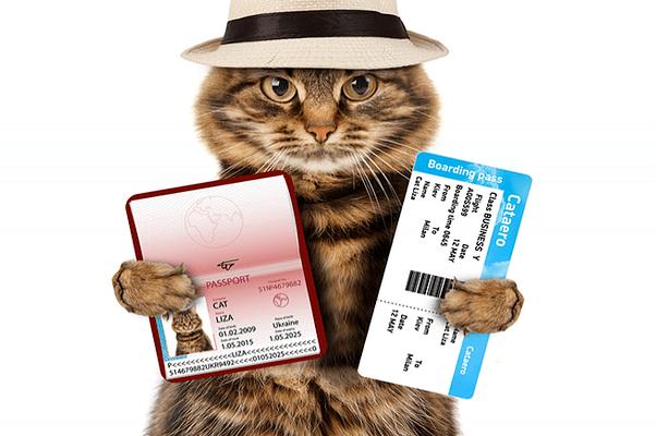 vet-pasport (1)