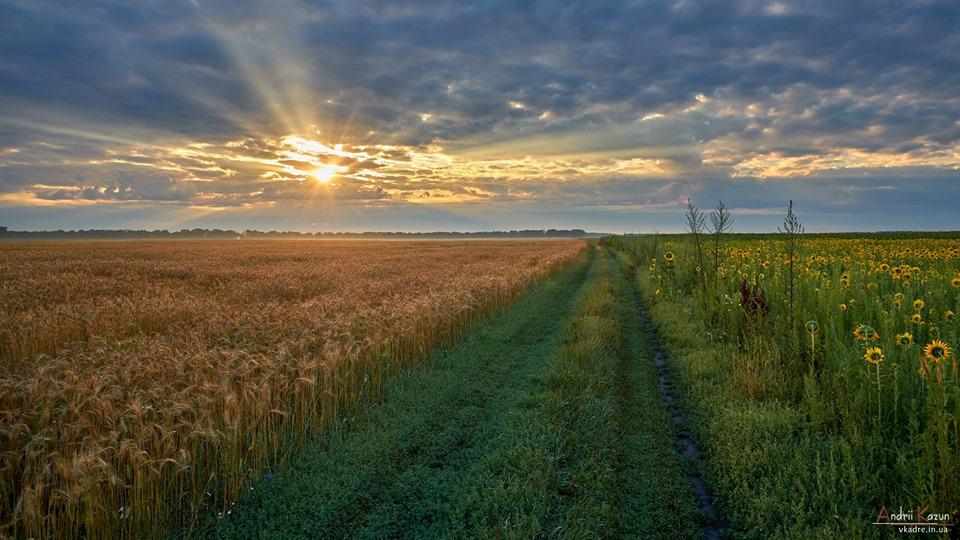 Краса полів Чернігівщини (Фото)