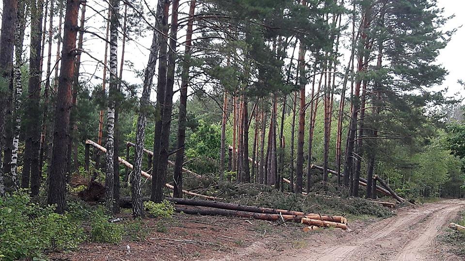 На Чернігівщині від буревію постраждало 163 гектари лісів (Фото)
