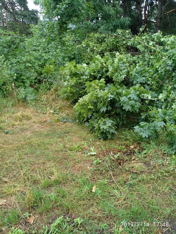 Чернігівка дивом не стала жертвою дерева, яке не витримало дощу (Фото)