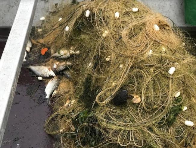 У Козелецькому районі затримано рибалок-порушників (Фото)