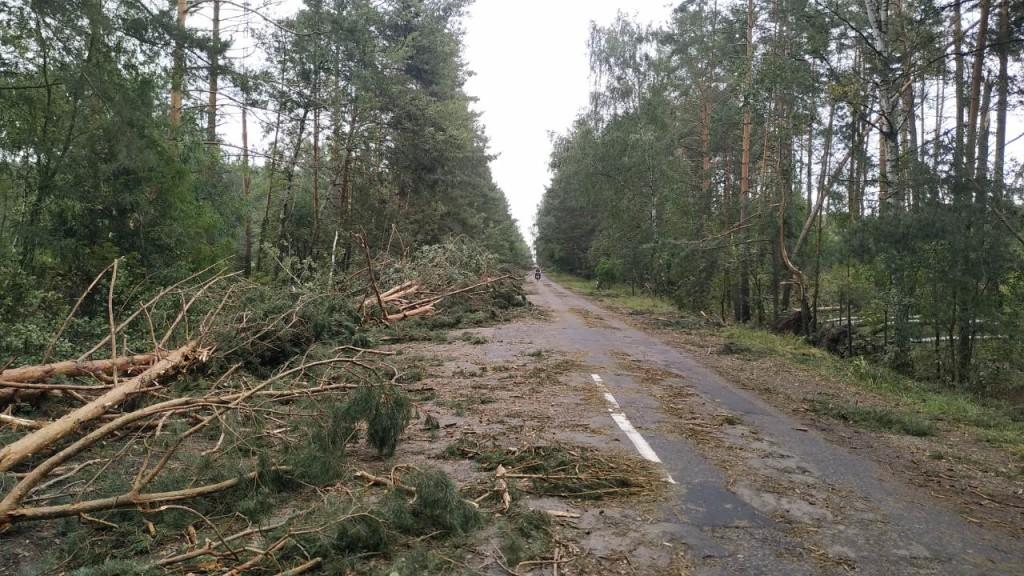 Через негоду деревопад у Чернігівській області (Фото)