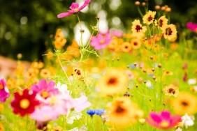 vivid-flowers-1920x1080-wallpaper-1024x576