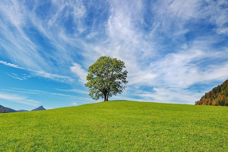tree-2888513_960_720