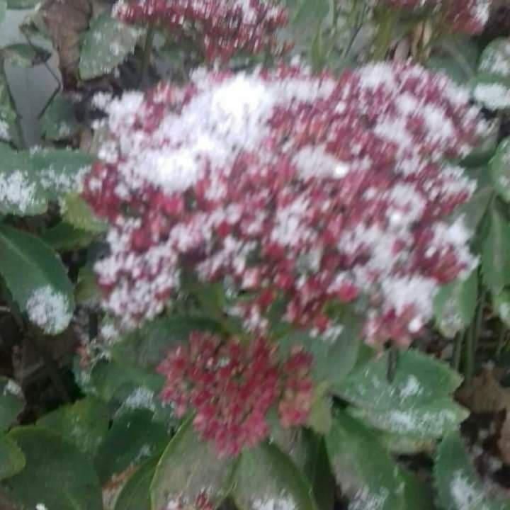 На Чернігівщині сніжить (Фото)