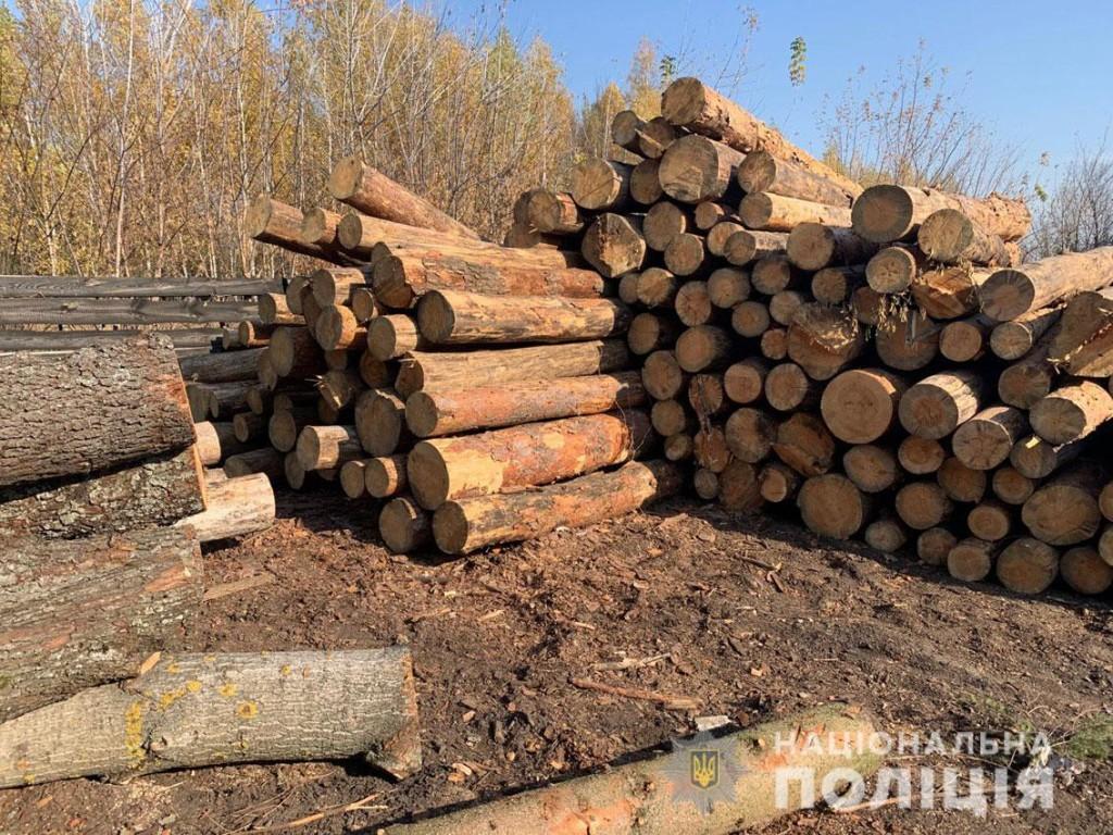 Ніжинська поліція встановлює причетних до масштабної незаконної порубки лісу (Фото)