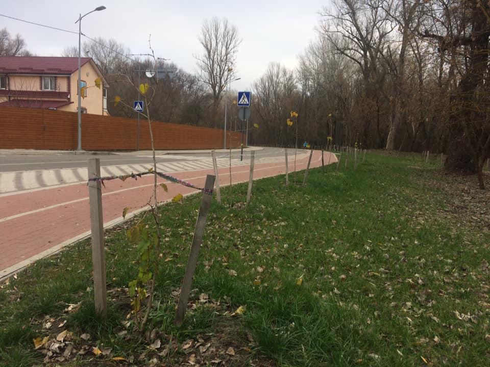 На вулицях Чернігова з'являться сумахи (Фото)