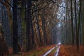 osen-noyabr-les-derevya