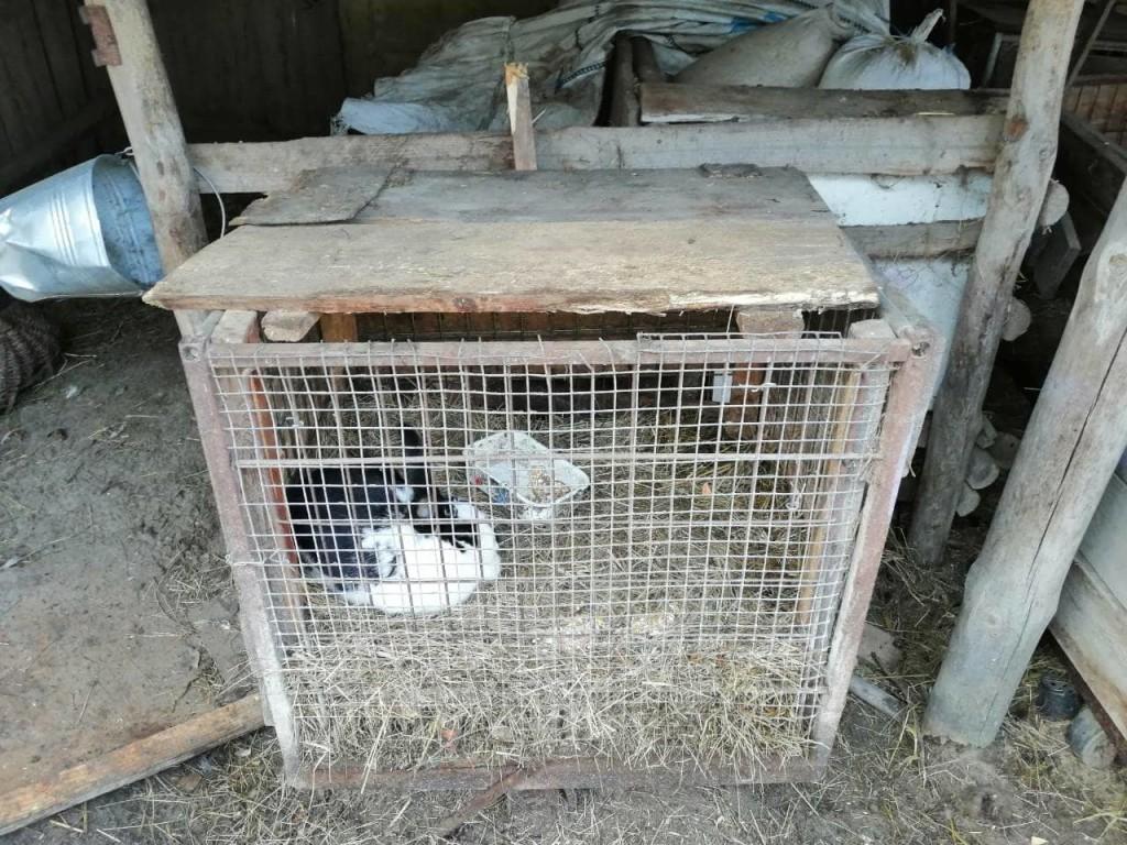 На Чернігівщині невідома істота потрощила клітки та вбила кролів (Фото)