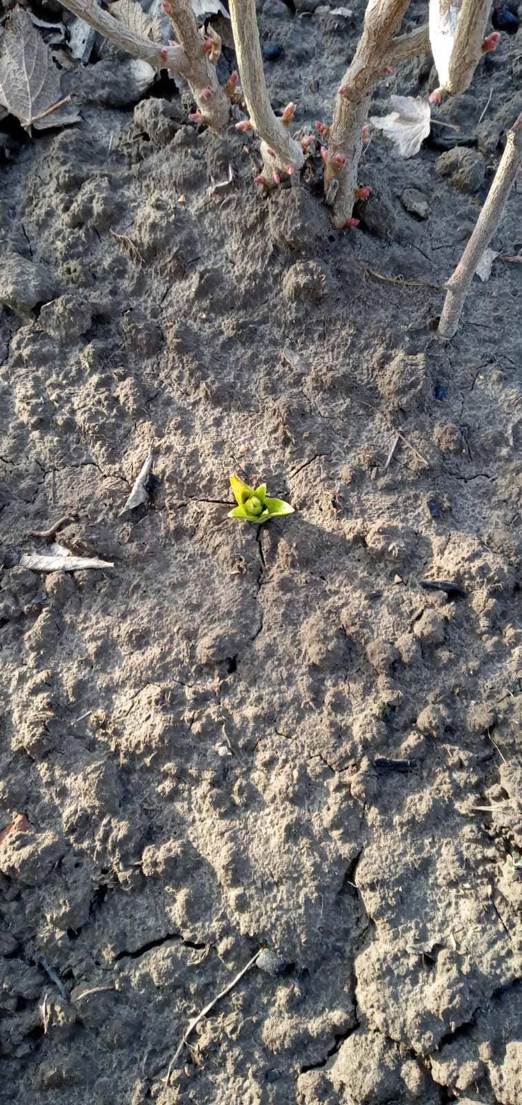 Чернігівщина розцвіла в грудні (Фото)