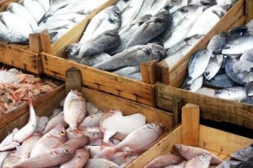 fish-655x333