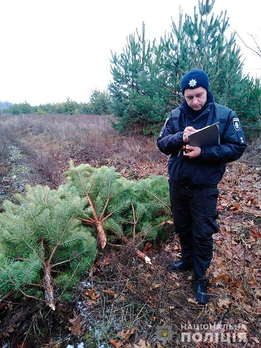 Майже 200 сосен незаконно вирубали на Чернігівщині (Фото)