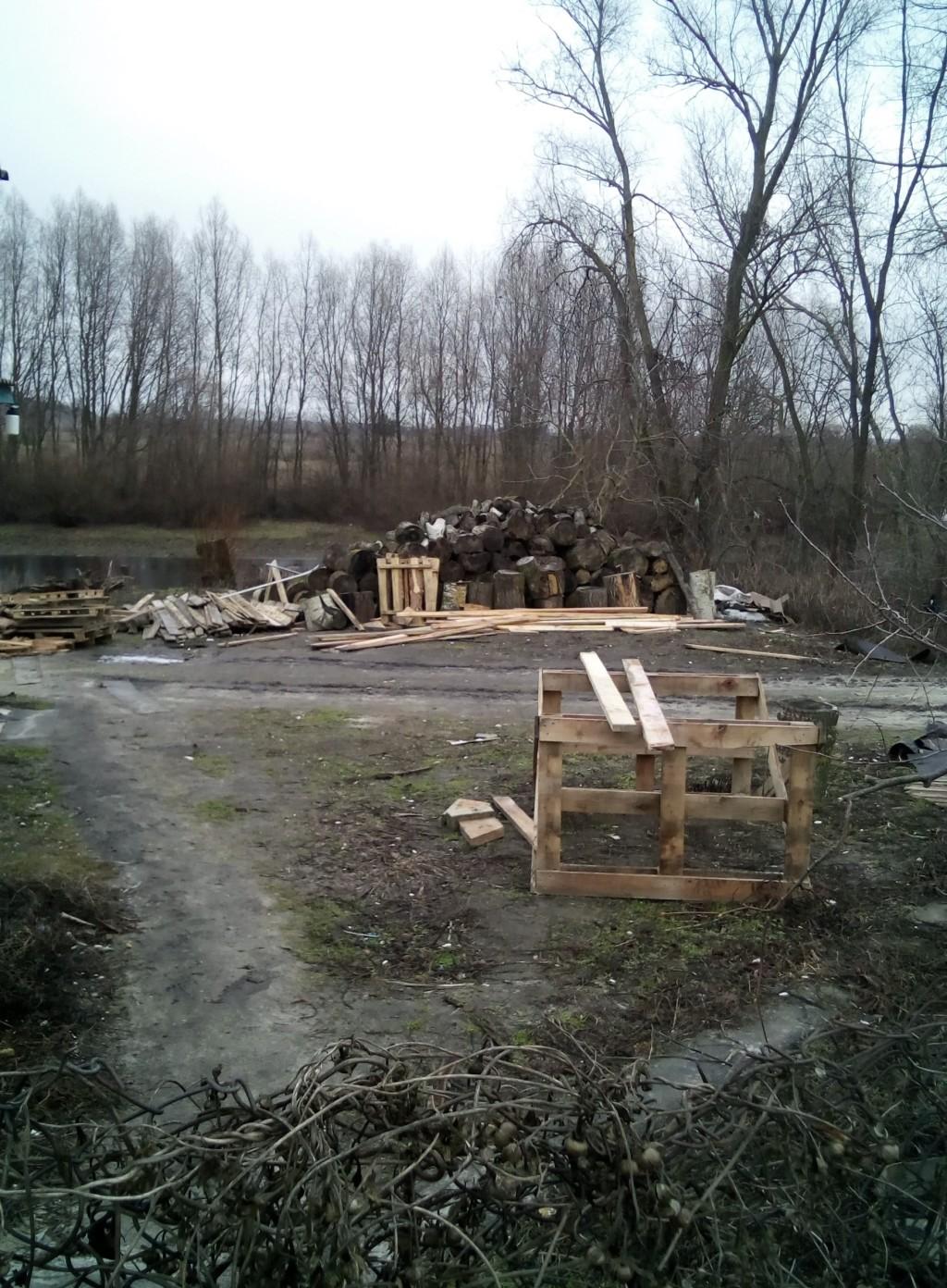 У Чернігівському районі виявлено факт незаконної рубки дерев (Фото)