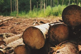 wood-522412_1280