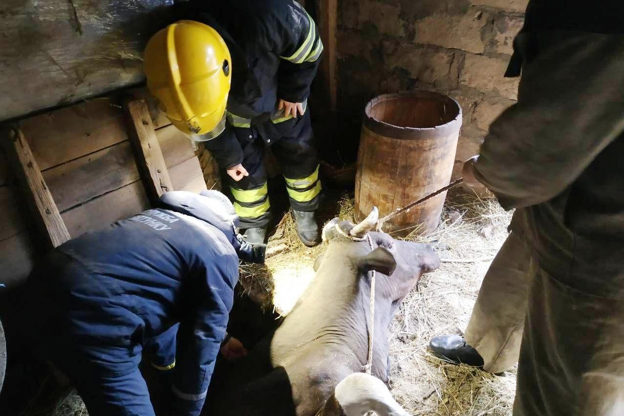 На Чернігівщині рятувальники вивільнили корову з 2-метрової пастки (Фото)