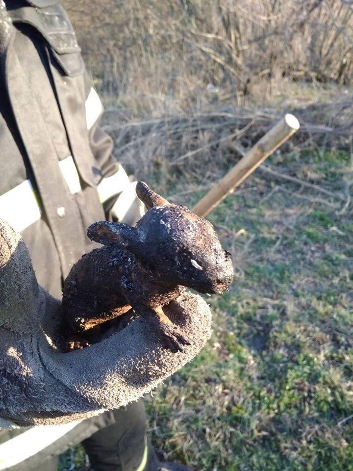 На Чернігівщині «весняне прибирання» обвуглює тварин (Фото)