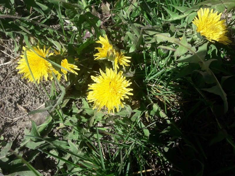 Чернігівщина буяє квітами (Фото)