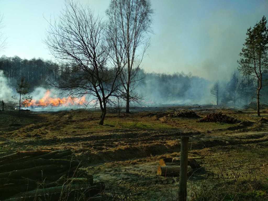 У Чернігівській області горить 9 га лісу: до гасіння залучили авіацію (Фото)