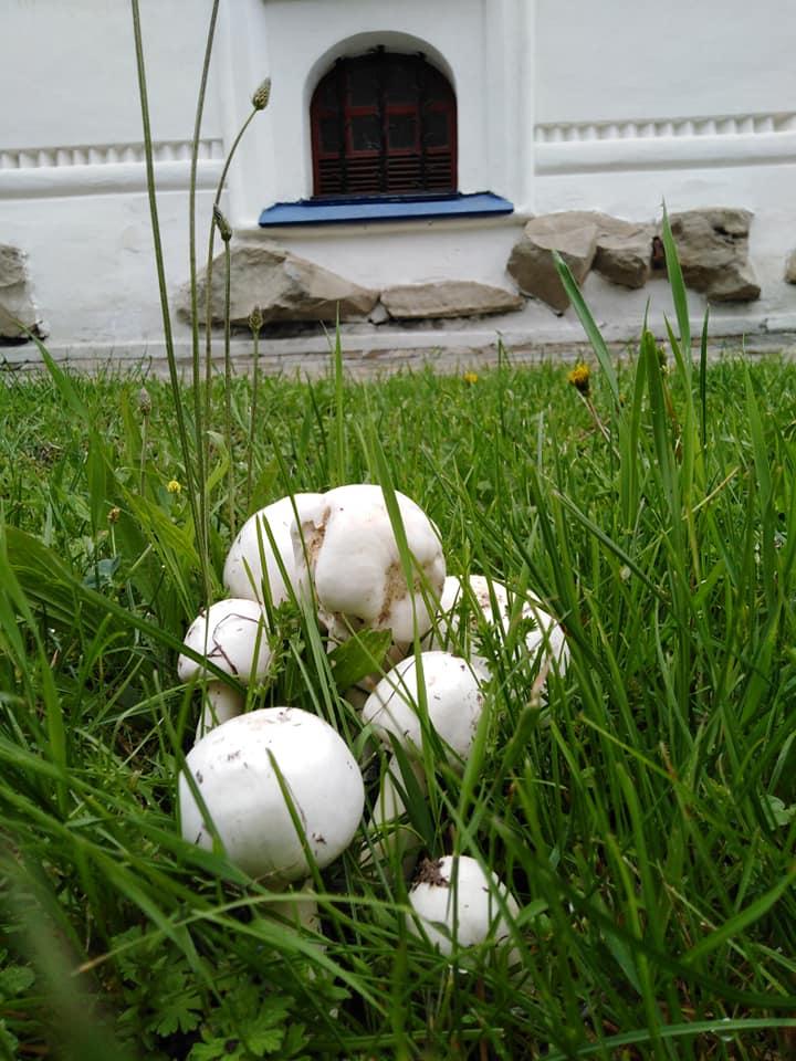 На Валу почали рости гриби (Фото)