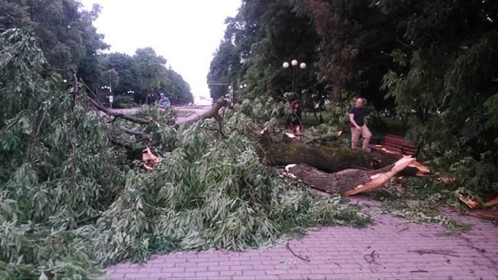 Деревопад у Чернігові: буревій пройшовся центром міста (Фотофакт)