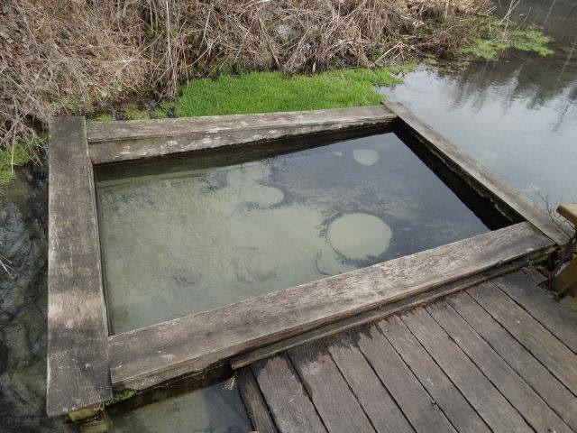 На Чернігівщині є унікальна водойма, де навіть взимку не замерзає вода (Фото)