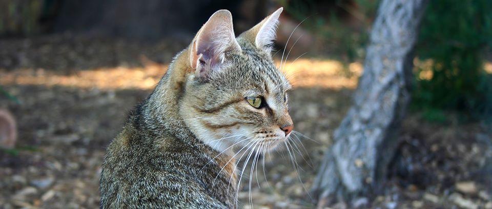 На Чернігівщині працює унікальний музей диких котів (Фото)