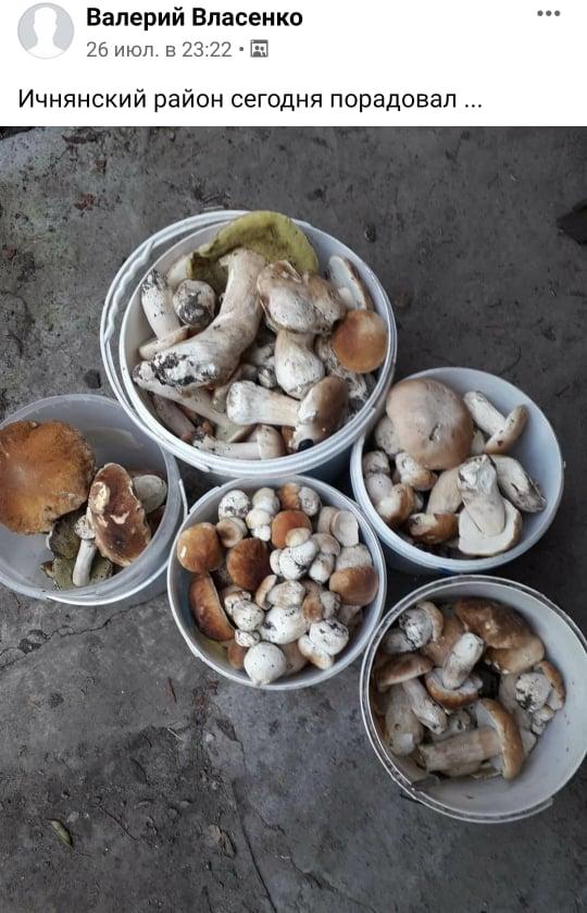 Сезон тихого полювання: грибники Чернігівщини хизуються чималим урожаєм (Фото)