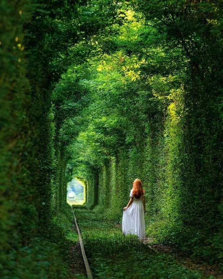 На Чернігівщині є власний «тунель кохання» (Фото)