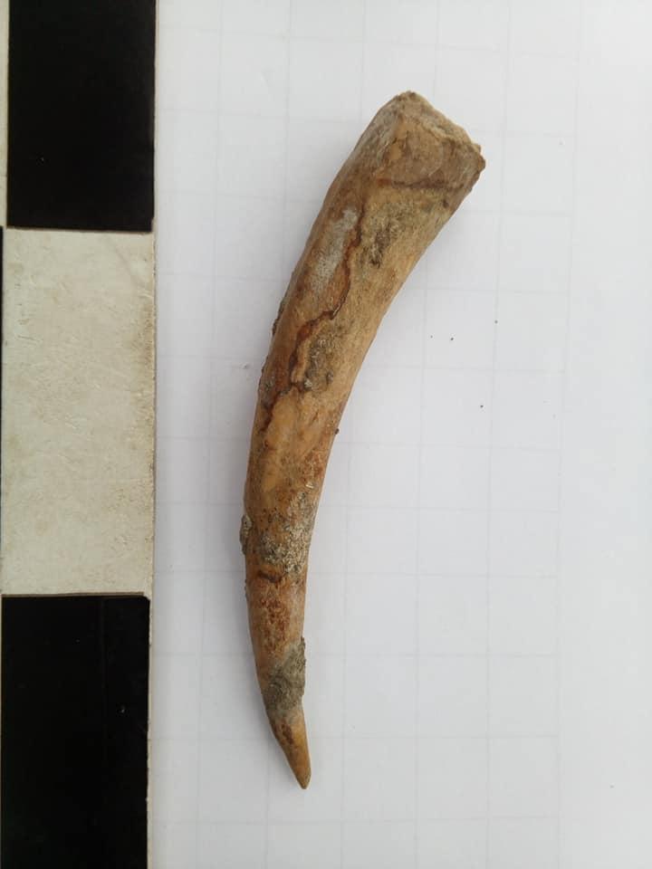 Археологи досліджують Мезин: перші знахідки (Фото)
