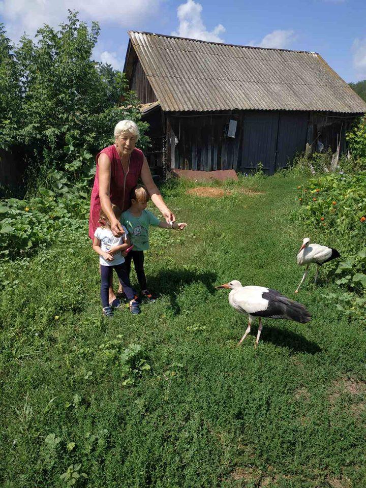 У селі на Чернігівщині врятували трьох лелеченят (Фото)
