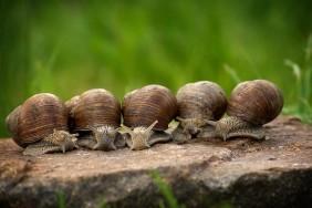 K800_snail-2983235_960_720