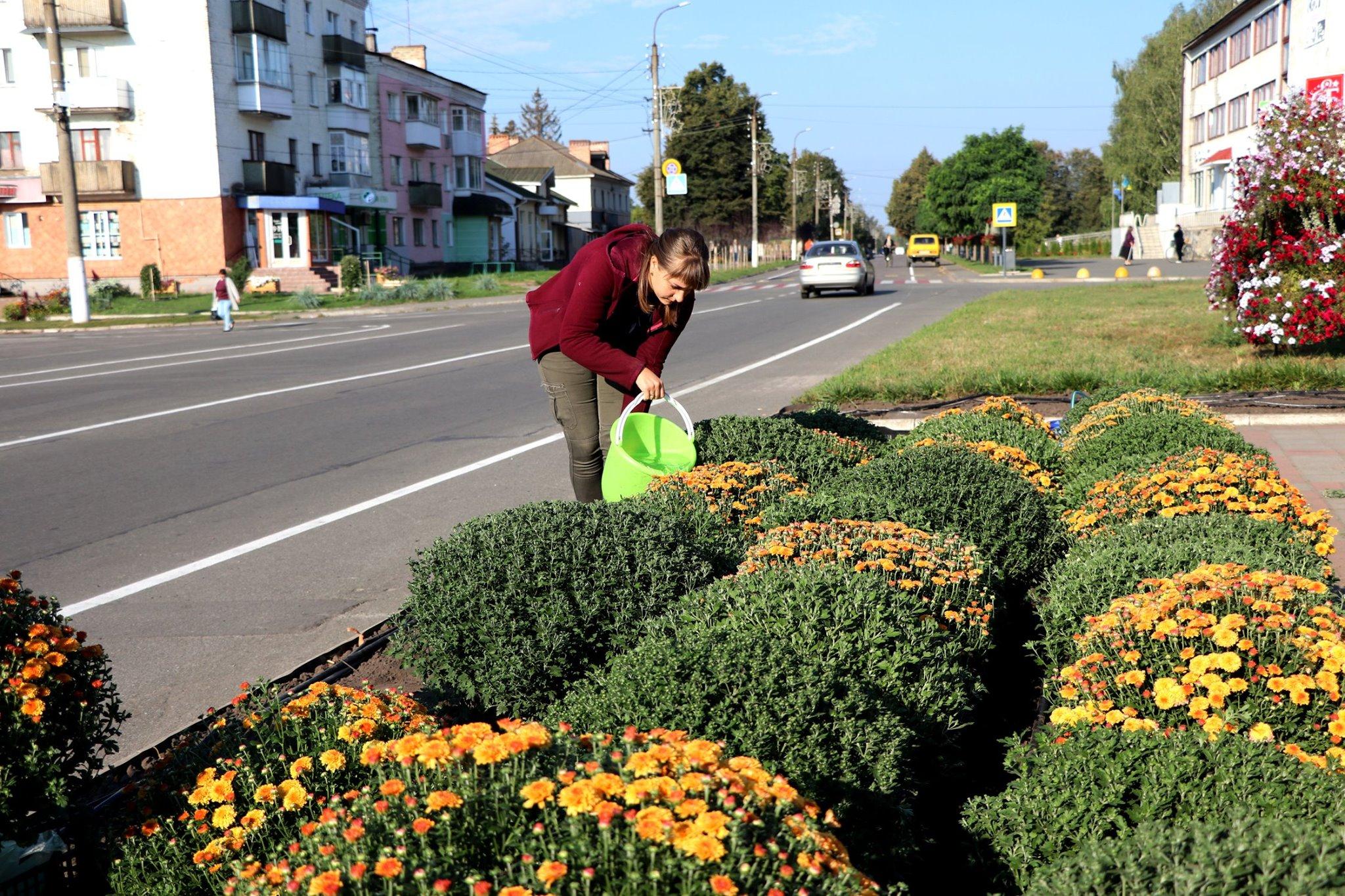 У центрі Корюківки висаджують хризантеми (Фото)