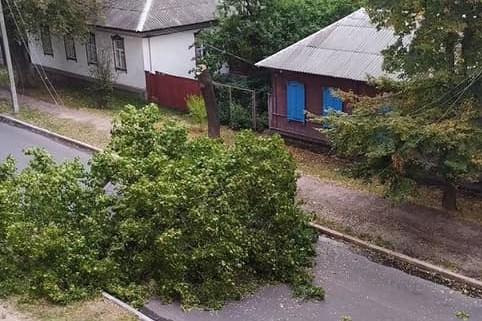 У Чернігові на проїжджу частину впало дерево (Фотофакт)