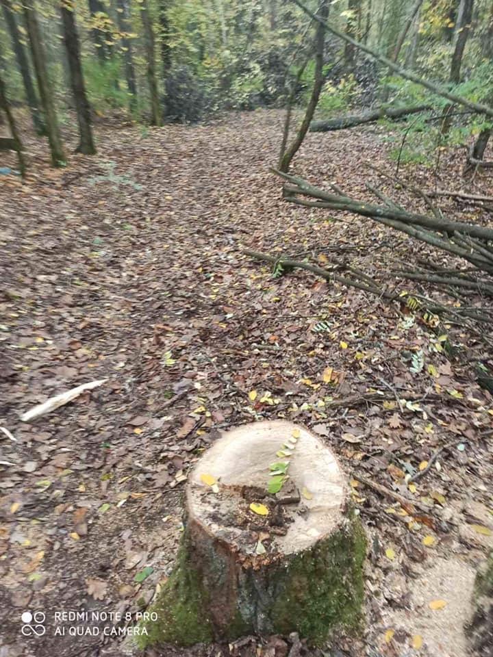 Чернігівські лісівники затримали «чорних лісорубів» (Фото)