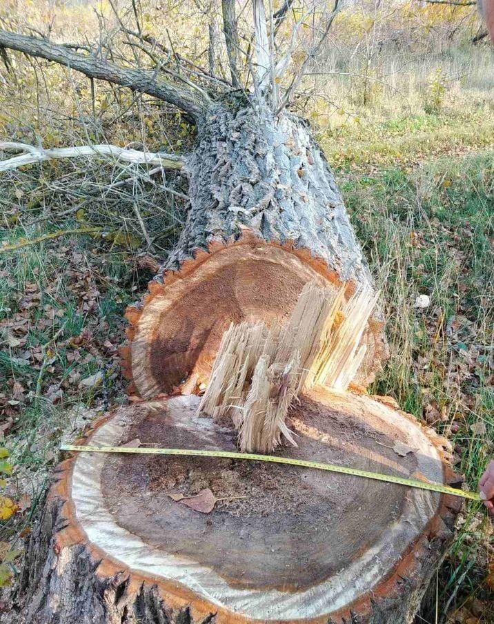 У Козелецькому районі незаконно вирубали більше 60 дерев (Фото)