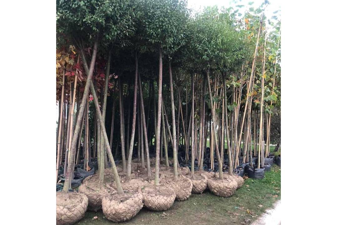 На чернігівському загальноміському суботнику планують висадити більше 240 рослин (Фото)