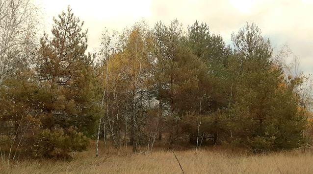В Ічнянському національному парку почали гинути дерева (Фото)