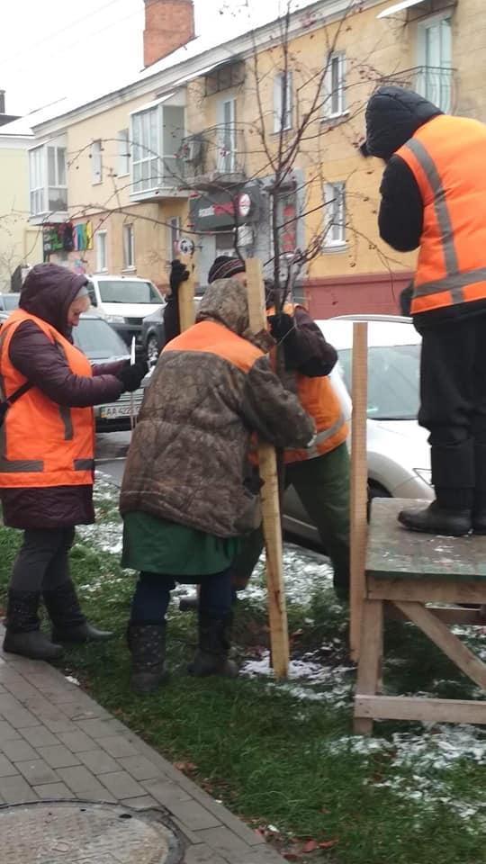 Комунальники Чернігова готують дерева до зими (Фото)