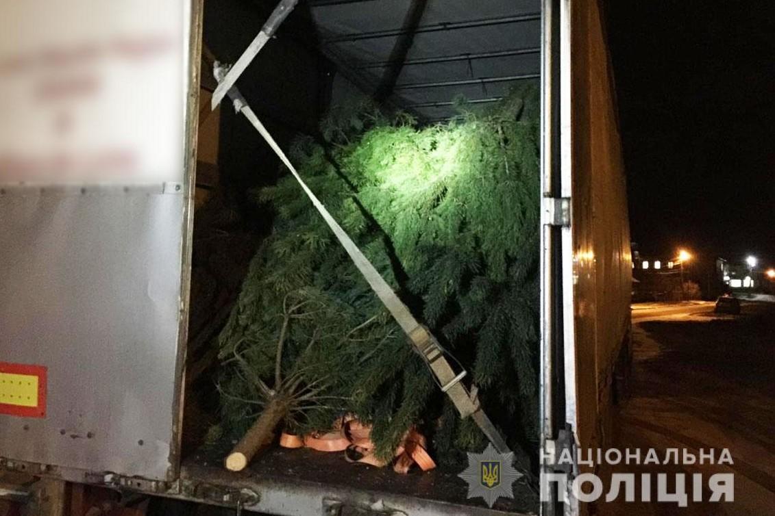 На Чернігівщині затримали вантажівку зі свіжозрубаними соснами (Фото)