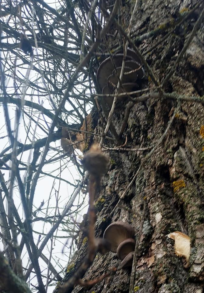 На Чернігівщині відкрили грибний сезон (Фотофакт)