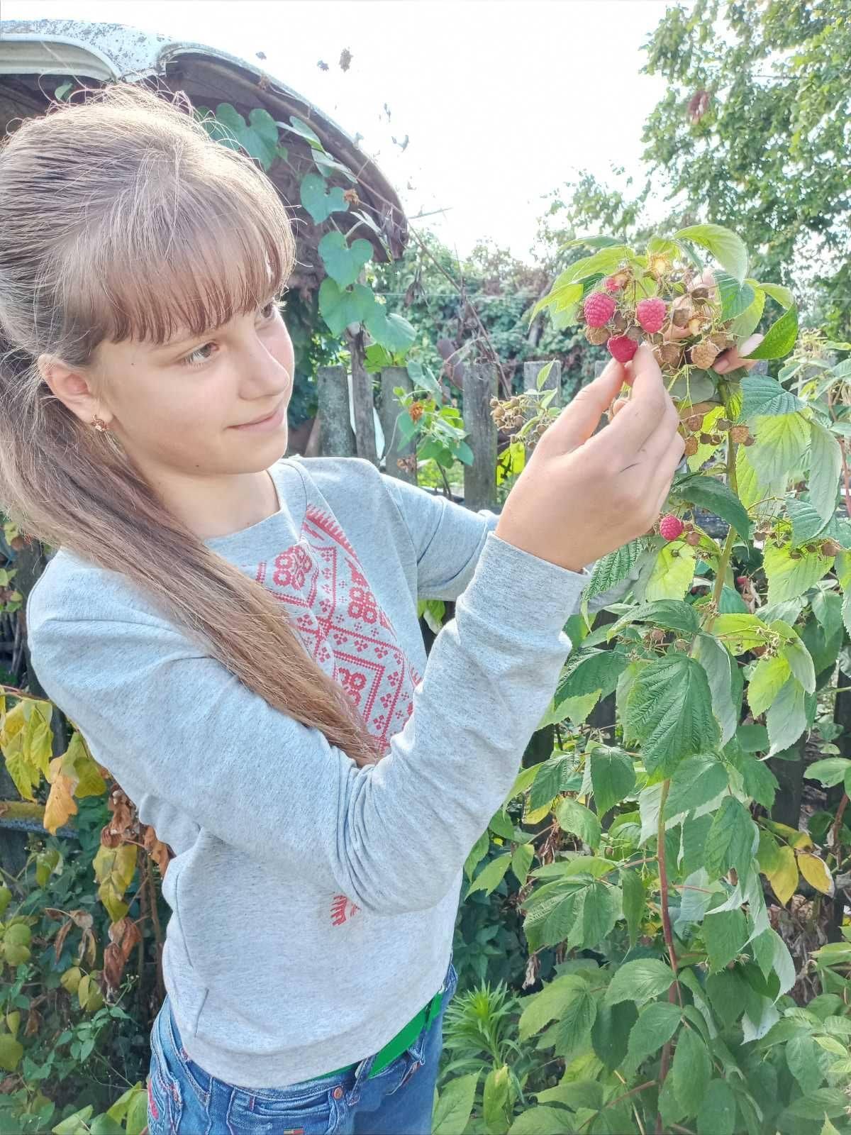 Школярку з Чернігівщини нагороджено грамотою за успіхи в садівництві (Фото)