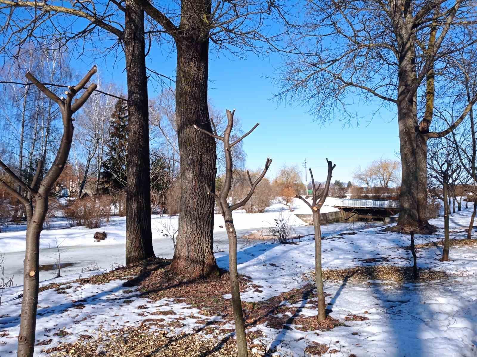 У Городні почали кронувати дерева (Фото)