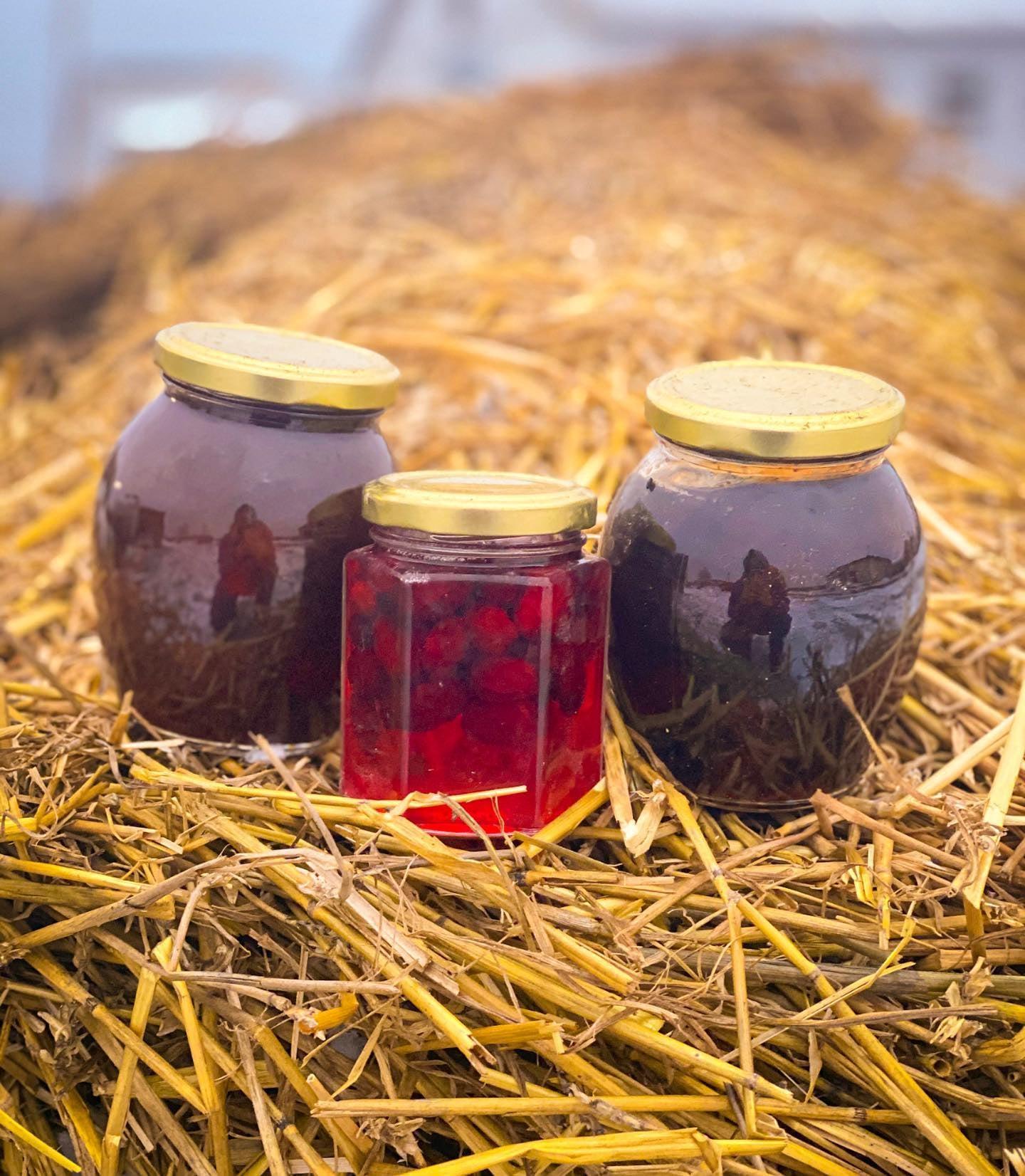 На Чернігівщині для туристів відкрили ягідну екоферму (Фото)