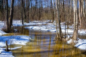 depositphotos_62630517-stock-photo-early-spring-in-forest-sunny