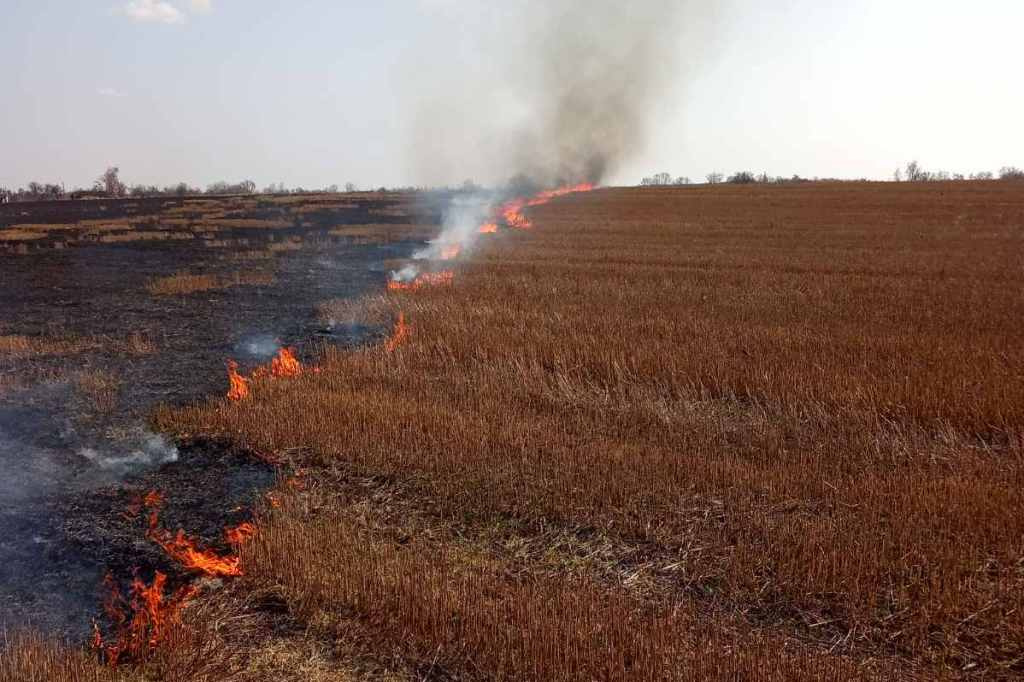 Упродовж минулої доби рятувальники ліквідували 37 пожеж, які виникли через спалювання сухої рослинності (Фото)