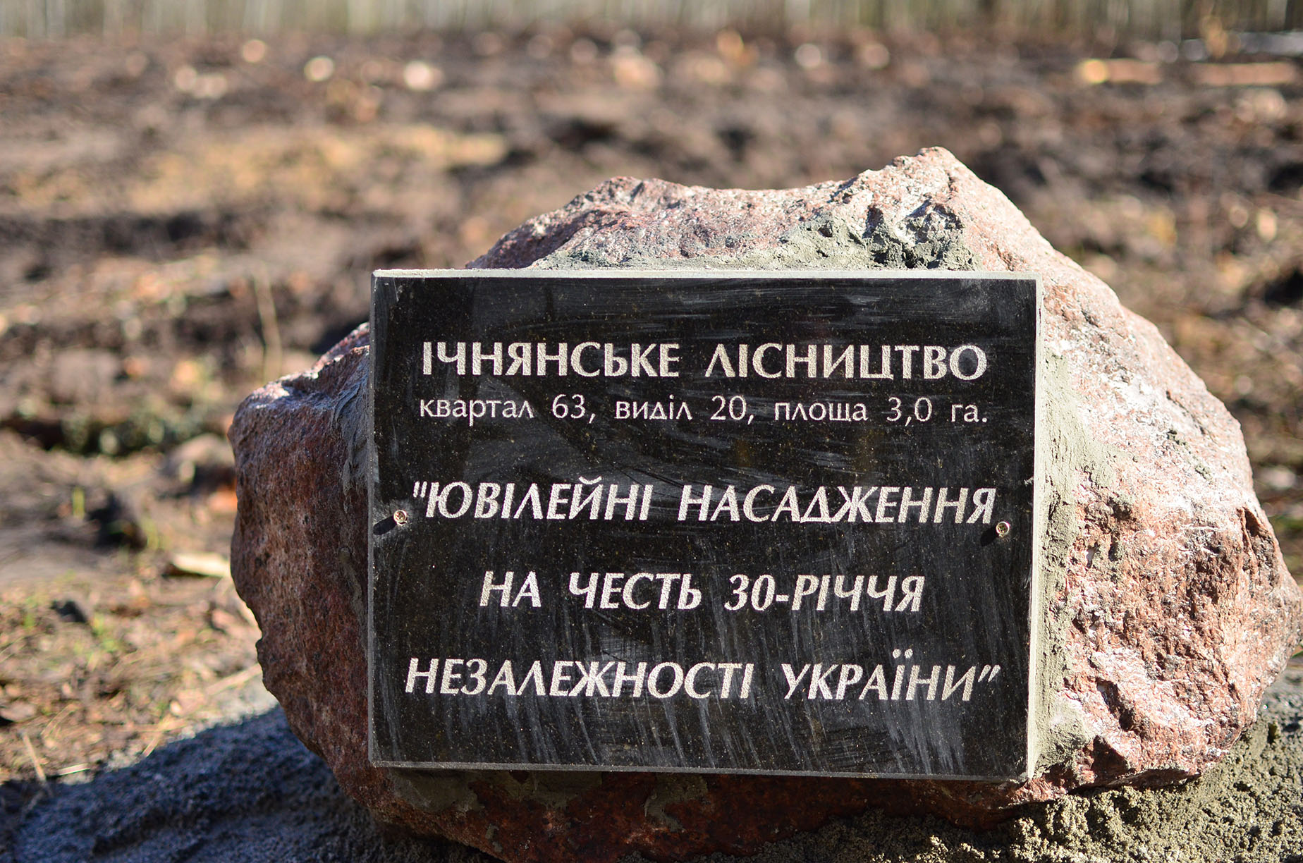На Чернігівщині висадили ювілейні насадження з нагоди 30-річчя незалежності України (Фото)