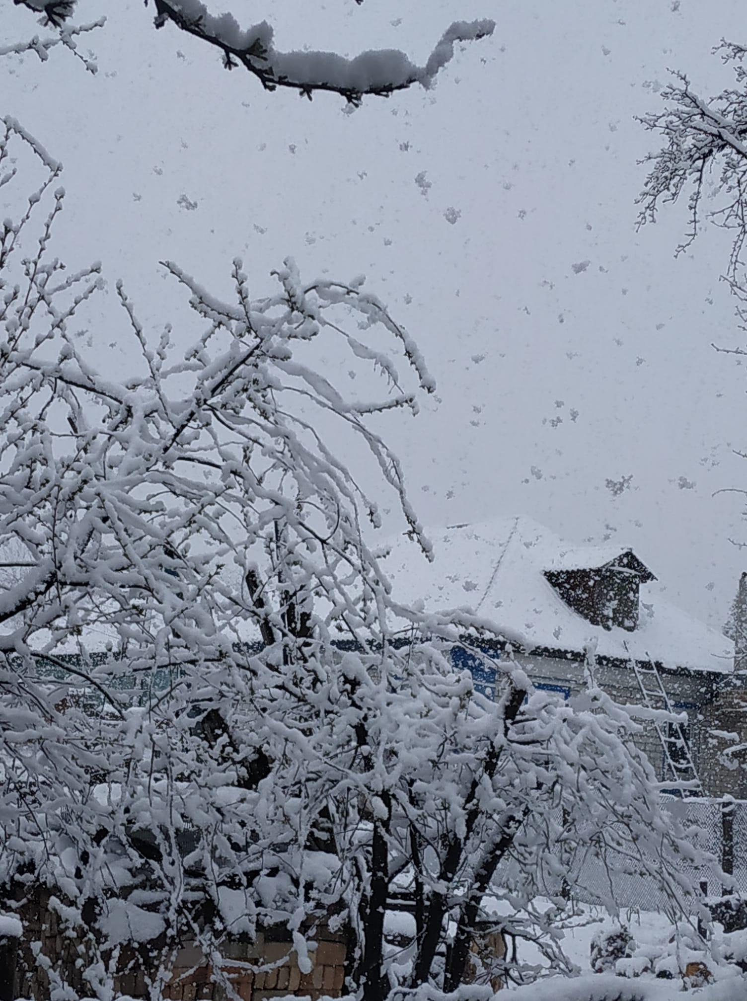 На Чернігівщині випав сніг (Відео, фото)