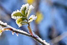 Frost and snow on branches. Beautiful winter seasonal  background. Photo of frozen nature.
