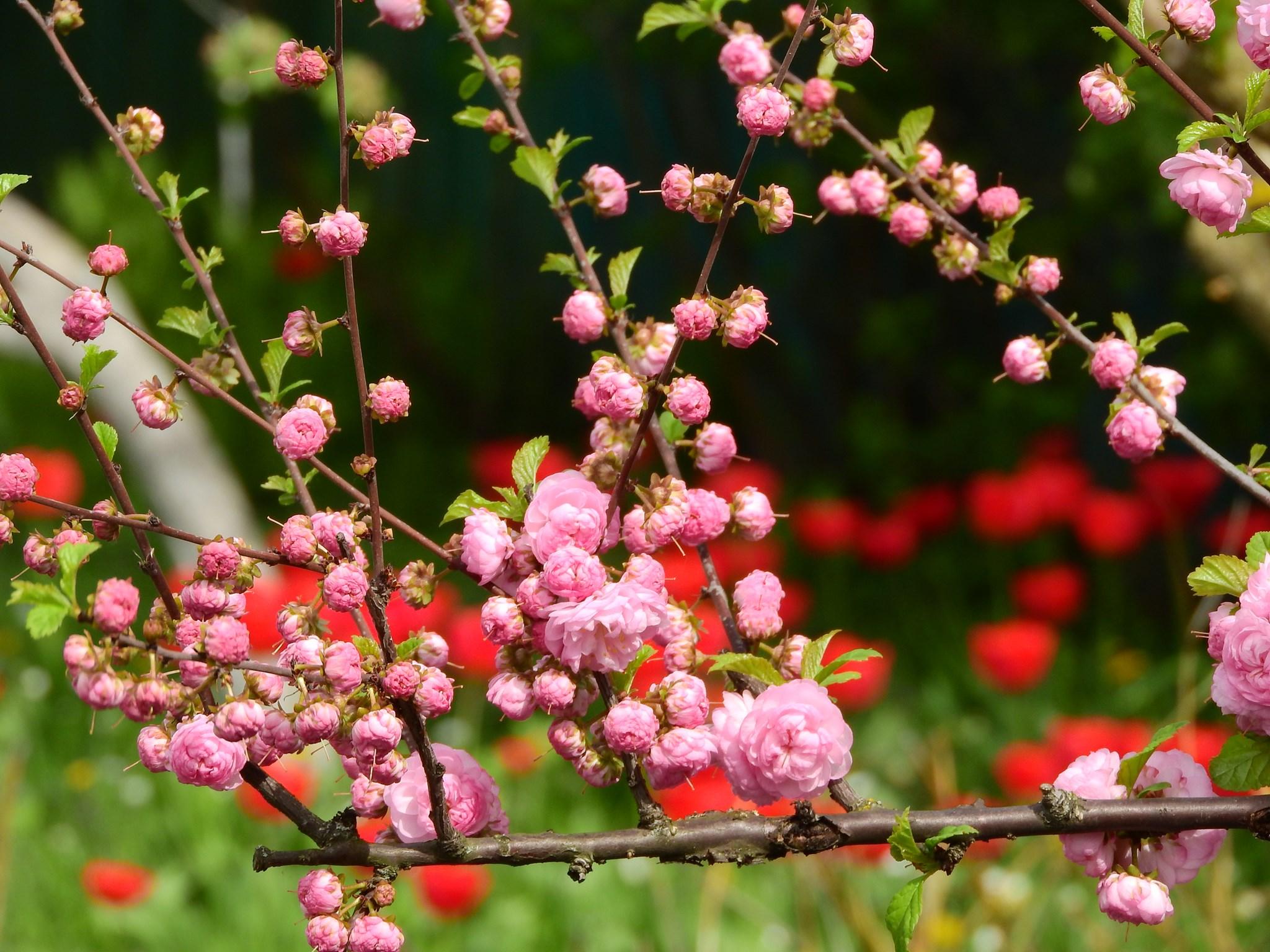 У музеї Коцюбинського розквітла оаза квітів (Фото)