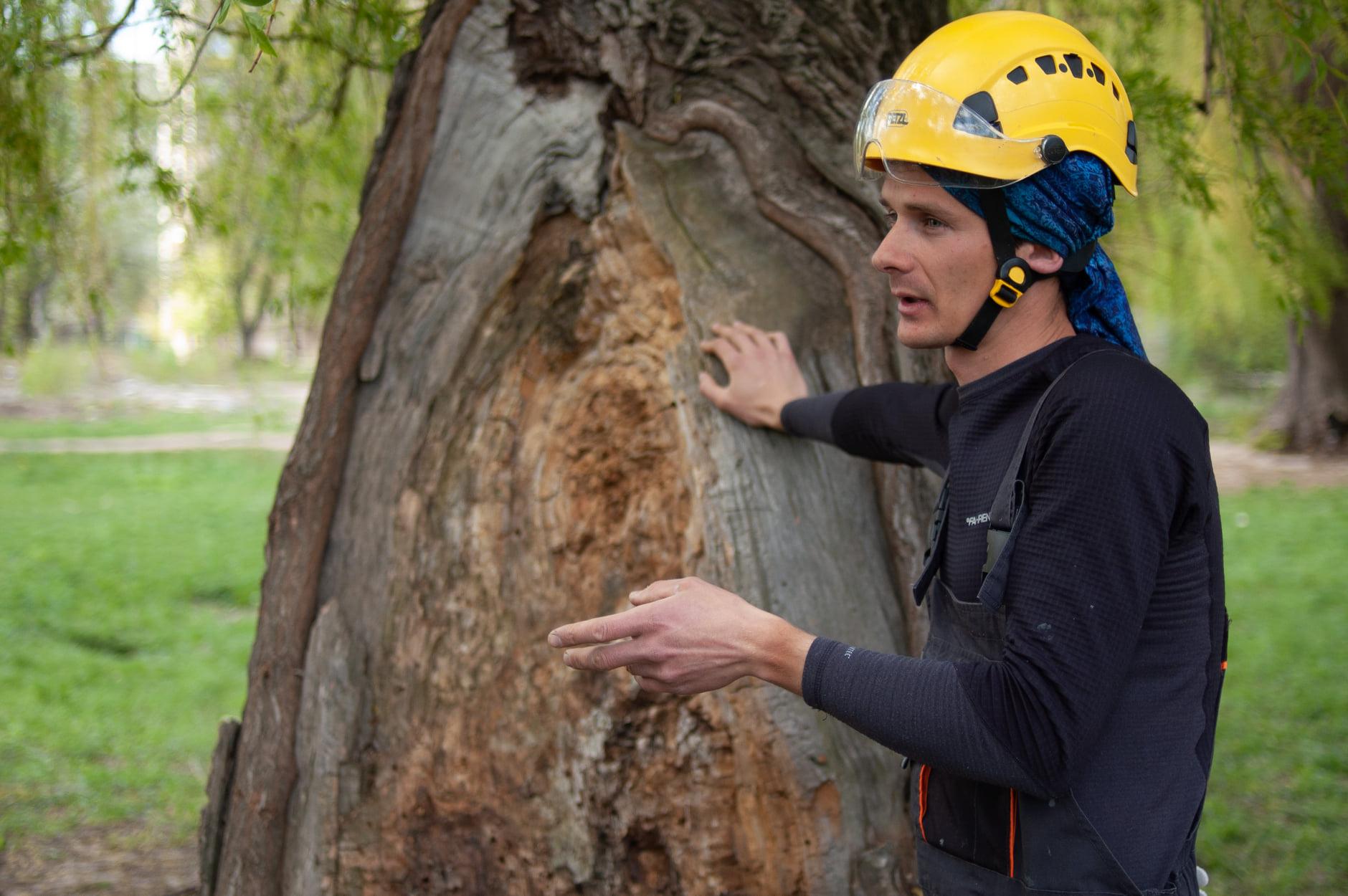 У Чернігові почали лікувати дерева (Фото)